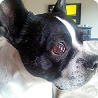 Adopt A Pet :: DWIGHT - Nampa, ID