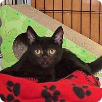 Adopt A Pet :: Barkley - Ocean City, NJ