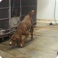 Adopt A Pet :: AUTUMN - Upper Sandusky, OH