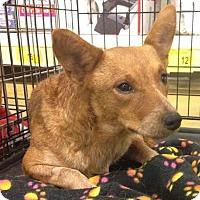 Adopt A Pet :: Tandy - Gainesville, FL