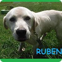 Adopt A Pet :: Ruben - Batesville, AR
