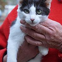 Adopt A Pet :: Moo - Vacaville, CA
