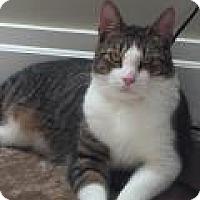 Adopt A Pet :: Liz - East Hanover, NJ