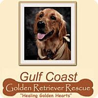 Adopt A Pet :: Foster a Golden Retriever - Murdock, FL