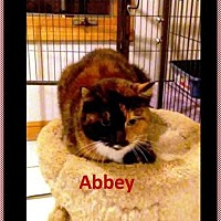 Adopt A Pet :: Abbey Senior in Need of a HOME - Rootstown, OH