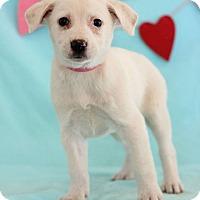 Adopt A Pet :: Laura - Waldorf, MD