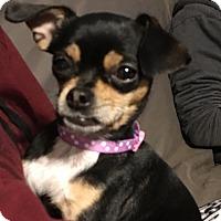Adopt A Pet :: LuLa-Belle (ADOPTED) - Trenton, NJ