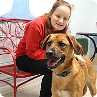 Adopt A Pet :: Rusty-Prison Graduate - Elyria, OH