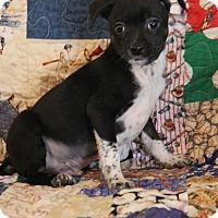 Adopt A Pet :: Jake - Yuba City, CA