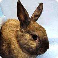 Adopt A Pet :: NICE - Brooklyn, NY