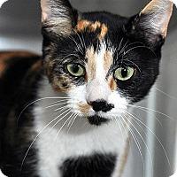 Adopt A Pet :: Sunflower - Fort Leavenworth, KS