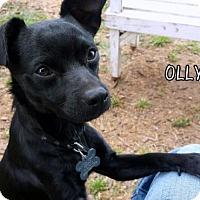 Adopt A Pet :: Olly - Lindsay, CA