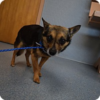 Adopt A Pet :: Aggie - Bay Shore, NY