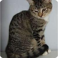 Adopt A Pet :: Wild Heart - Lake Charles, LA