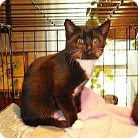 Adopt A Pet :: Luigi - CARVER, MA