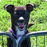 Adopt A Pet :: Peabody - Meridian, ID