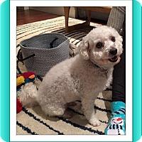 Adopt A Pet :: Adopted!!Ziggy - IL - Tulsa, OK