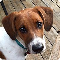 Adopt A Pet :: Kodi - Richmond, VA