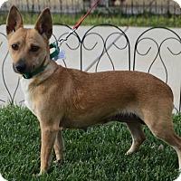 Adopt A Pet :: Ivy - Palo Alto, CA