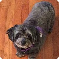 Adopt A Pet :: Lillee - Newfield, NJ