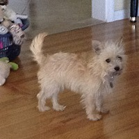 Adopt A Pet :: Precious - Carlsbad, CA