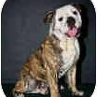 Adopt A Pet :: Tiger - conyers, GA