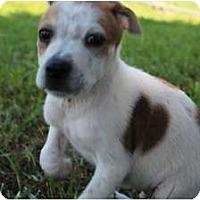 Adopt A Pet :: Judge - Spring Valley, NY