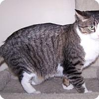 Adopt A Pet :: Big Ben - Colorado Springs, CO