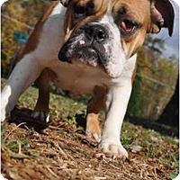 Adopt A Pet :: Lilly - Winder, GA