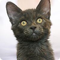 Adopt A Pet :: Chad - Canoga Park, CA