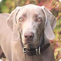 Adopt A Pet :: Gage - Costa Mesa, CA