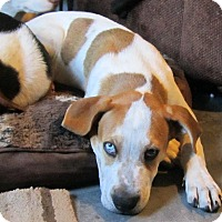 Adopt A Pet :: Max - Copperas Cove, TX