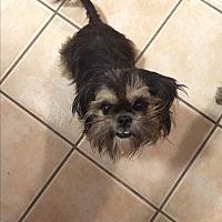 Adopt A Pet :: Corbin - Jennings, OK
