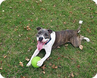 Pit Bull Terrier Mix Dog for adoption in Broken Arrow, Oklahoma - Danny