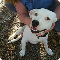 Adopt A Pet :: Bandit in Ct - Manchester, CT