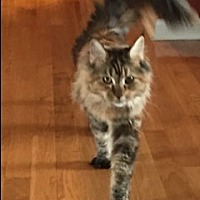 Adopt A Pet :: TN - Cyprus (CP) - Lambertville, MI