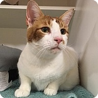 Adopt A Pet :: Cinder - Hamburg, NY