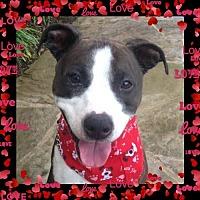 Adopt A Pet :: ZZ-Piper *courtesy post - Rancho Santa Margarita, CA