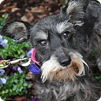 Adopt A Pet :: Liza - Atlanta, GA