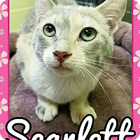 Adopt A Pet :: Scarlett - Edwards AFB, CA