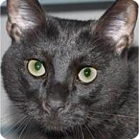 Adopt A Pet :: Sonny - Waupaca, WI