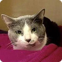 Adopt A Pet :: Runt - Lincolnton, NC