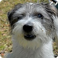 Adopt A Pet :: KRAMER - West Palm Beach, FL