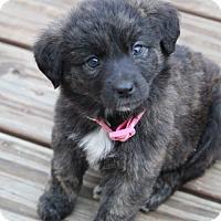 Adopt A Pet :: Chelsea - Westport, CT
