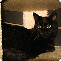 Adopt A Pet :: Coco - Norwich, NY