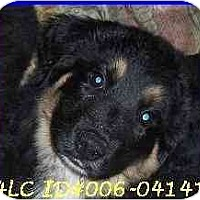 Adopt A Pet :: Rufus - Hamilton, ON