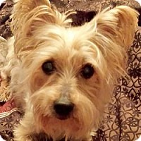 Adopt A Pet :: Scout - Leesburg, FL
