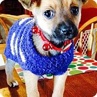 Adopt A Pet :: Flexie - Gilbert, AZ