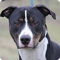 Adopt A Pet :: Lady Leona (Spayed) - Marietta, OH