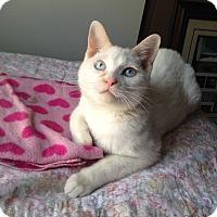 Adopt A Pet :: Dylan - New Braunfels, TX